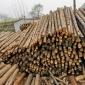 木已成舟 供应  5米小头12公分以上 杉木桩  杉木条 模具定做 欢迎电话咨询