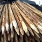 木已成舟 供应  4.5米小头8公分以上 杉木桩  杉木条 批发商 欢迎电话咨询