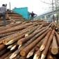 木已成舟 供应  7.5米小头8公分以上 杉木桩  杉木条 批发商 欢迎电话咨询