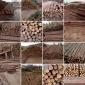 杉木桩 河道木桩 杉木厂家 原产地批发 多年经验 质优价廉 各种尺寸齐全 欢迎来电洽谈